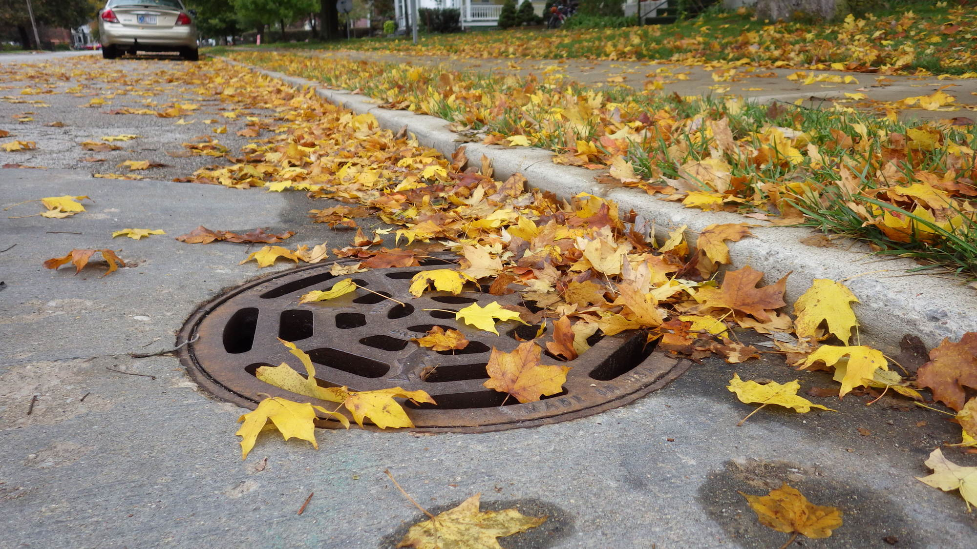 Leaves along the road and on a storm drain.